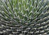 Close-up of Cactus-type plant