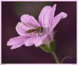 Little King Bee II