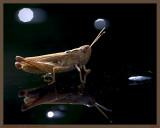 The  Grasshopper on my Lunar CAR.