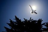 Le CROISIC.Gull in the Sun