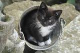 A bucket full of fun
