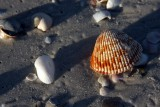 Shells in the early morning