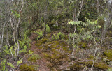 Ridgetop vegetation.