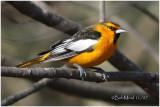 PENNSYLVANIA BIRDS-COVER VOL 21, NO. 4