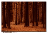 Mystery forest ...