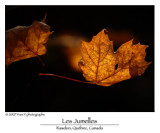 L'Automne -- Fall