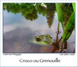 Croc or Frog ??