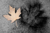 Concrete Leaf Impressions  ~  October 21  [7]