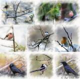 Vögel im Langgüetli