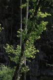 Baum im Langgüetli