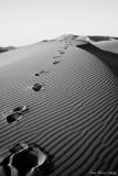 MOROCCO - SAHARA DESERT (B&W)