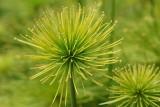 Flower in Bethesda garden