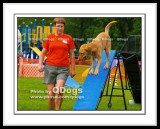 August 2008 Agility Trial - Lake Ontario Park