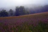 Morning, Shamper's Bluff