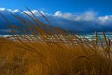Dune Grass Storm