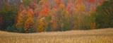 Fall Trees Pano