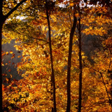 Fall Contre-jour