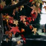Autumn in the Graveyard