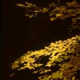 Sunlit Branch