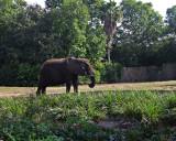 elephant 1240.jpg