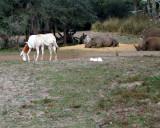 ostrich eggs rhinos 1246.jpg