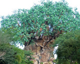 tree of life 1234.jpg