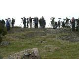 Black-shouldered Kite, twitchers