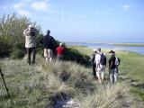 Paddyfield warbler, search