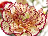 Côté petites fleurs