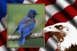 Framed blue bird.jpg