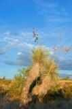 AZ desert.jpg