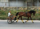 April 22 2010: Equine Power