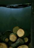 May 5 2010: A Lumberjack's Work