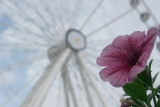Flower by the Wheel