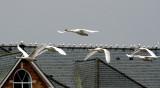 Flypast spectators