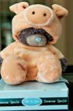 Porky Teddy