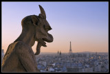 Gargoyl at Notre Dame