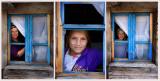 collage windows.jpg
