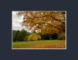 Late Autumn III