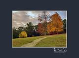 Late Autumn V