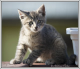 Displaced Kitten 2