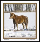 Pony with Winter Coat