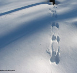 Squirrel Tracks and Signs
