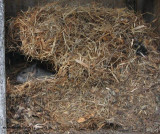 Mouse nest made of grass, in nest box