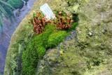 Sub-Antarctic Moss