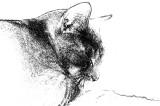 Taz-Sketch