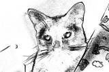 Lance-Sketch