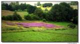 pasture-8337-sm.JPG