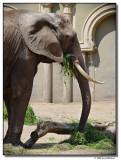 elephant-1324-sm.JPG