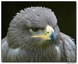 falcon-10197-sm.JPG